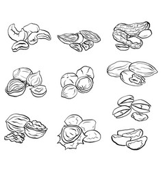 set of contour drawings of various types of nuts vector image