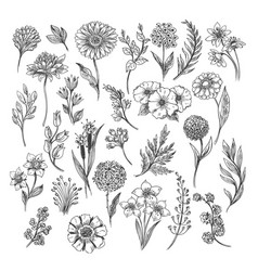 vintage flower and herbs sketch vector image