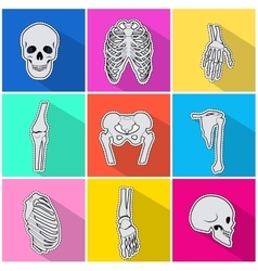 Skelet Icons Types of Bones on Bright Background vector image