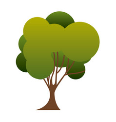 colorful silhouette green tree nature icon with vector image vector image