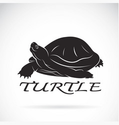 a turtle on white background reptile animal vector image vector image