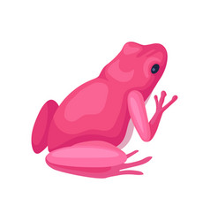 Bright pink frog back view small toad with black vector