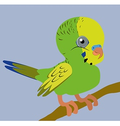 Budgie vector image