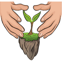 hand hold green plant vector image