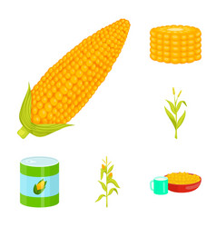 Isolated object of maize and food symbol vector