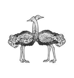 Ostrich birds love couple hug sketch vector