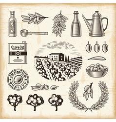 Vintage olive harvest set vector image vector image