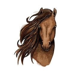 Brown mustang horse artistic portrait vector
