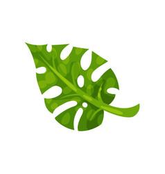 Green split-leaf of monstera natural element of vector