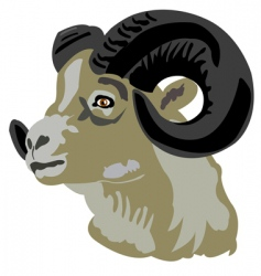 head of the mountain ram vector image
