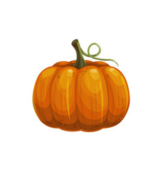 ripe pumpkin with stem isolated autumn vegetable vector image