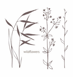 Wildflowers set of for design and decoration of vector