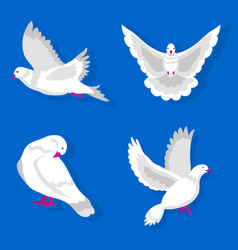white pigeons in various poses isolated on blue vector image