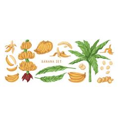 banana hand drawn set banana vector image