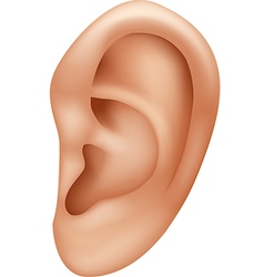 Cartoon of ear human isolated vector
