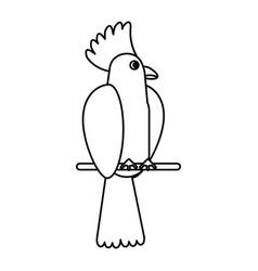 Cockatoo bird tropical thin line vector