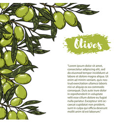 Olives flyer template with border from olive vector