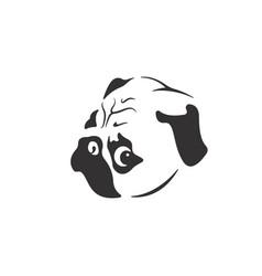 pug dog face design on white background vector image