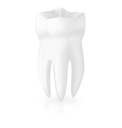 tooth realistic vector image