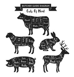 butcher guide cuts of meat diagram vector image