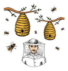 Apiary farm hand drawn vintage honey making vector