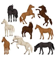 Flat set brown beige and black horses vector