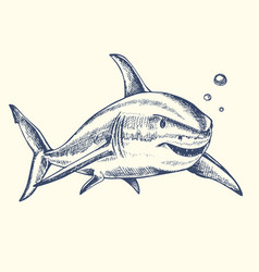 hand drawn shark vector image