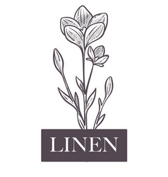 Linen natural production plant with flowers and vector