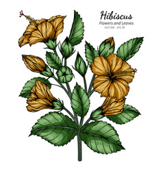 Orange hibiscus flower and leaf drawing with line vector