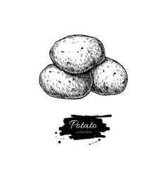 Potato drawing Isolated potatoes heap vector