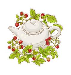 raspberry tea vector image