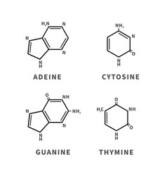 Set chemical structures adeine cytosine vector