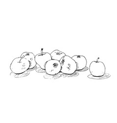 sketch freehand delicious juicy apples with shadow vector image