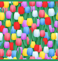 spring color tulips seamless pattern abstract vector image