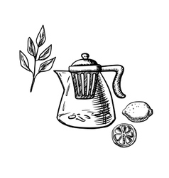 Teapot with infuser tea leaf and lemon fruit vector image