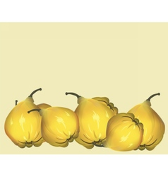 Yellow fresh quinces vector