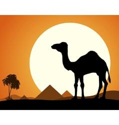 Camel in Desert vector image