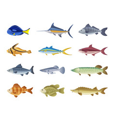 fish characters cartoon vector image
