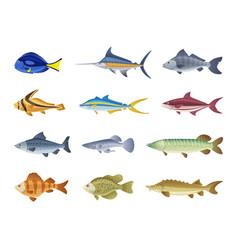 fish characters cartoon vector image