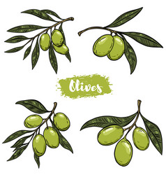 set of olive branch design elements for poster vector image