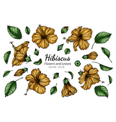 Set orange hibiscus flower and leaf drawing vector
