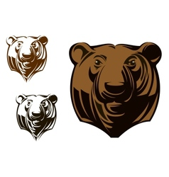 Big grizzly bear vector image vector image