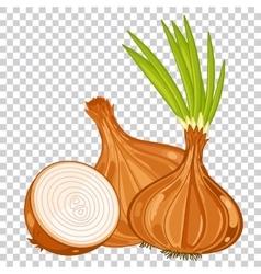Onion isolated organic food farm food vector image