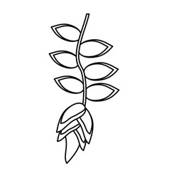 tropical flower plant thin line vector image