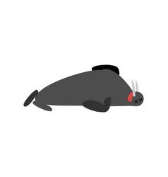 Dead walrus arctic and antarctic wild beast is vector