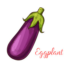 Eggplant sketch vegetable icon vector