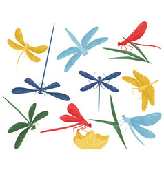 Flat set of colorful dragonflies small vector