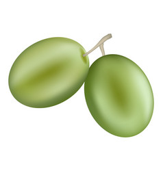 green olive icon realistic style vector image