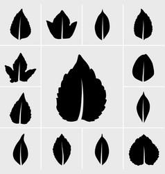 leaf icons set vector image