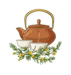 Rooibos tea vector